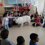 17.05.2017 Schulworkshop Volksschule Steinfeld